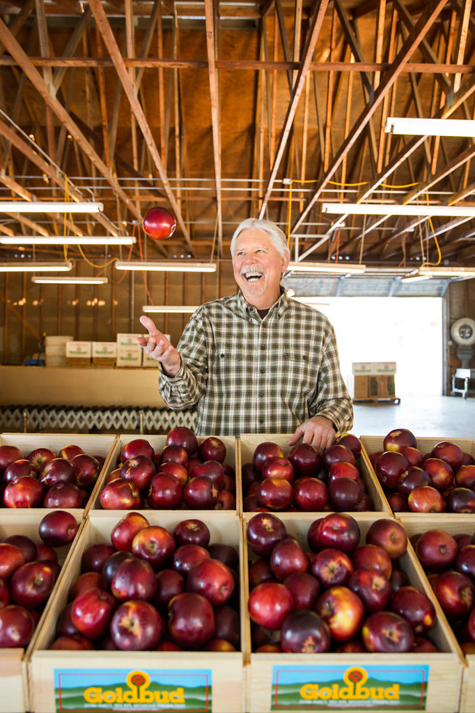 Man tossing apple over crates of apples