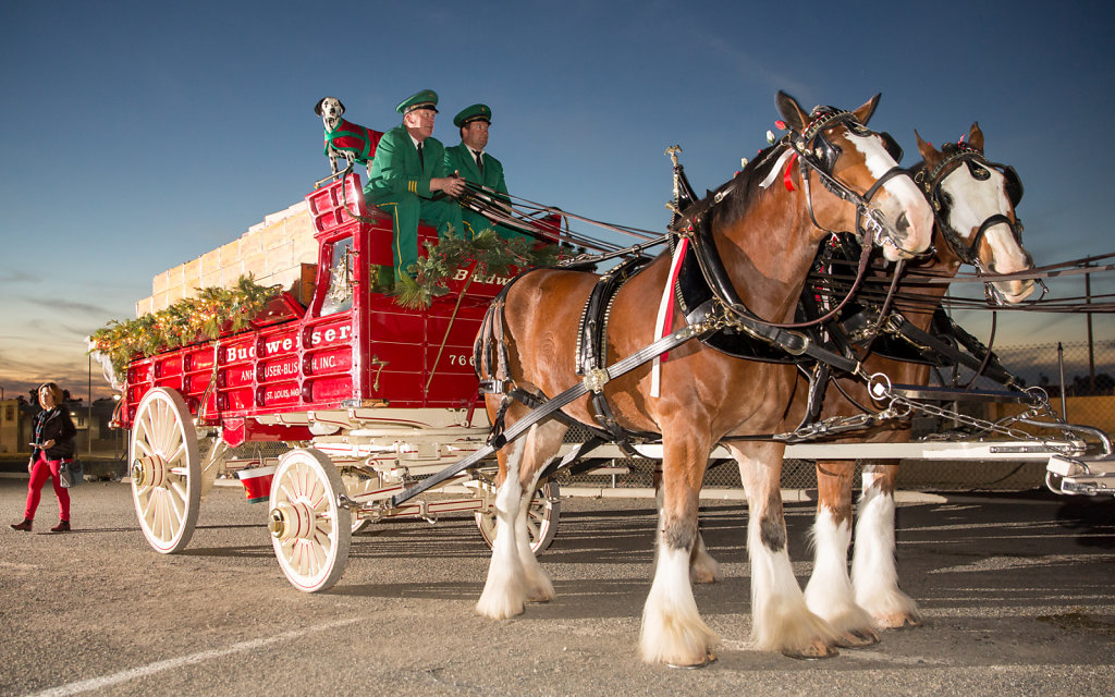 Budweiser Clydesdales with carriage